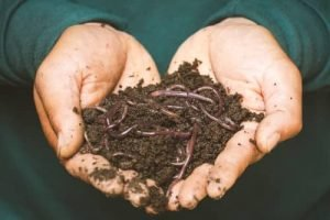 How To Raise Nightcrawlers. Can You Compost With Nightcrawlers?