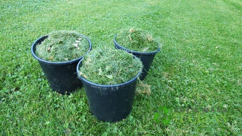 Fresh Grass Clippings